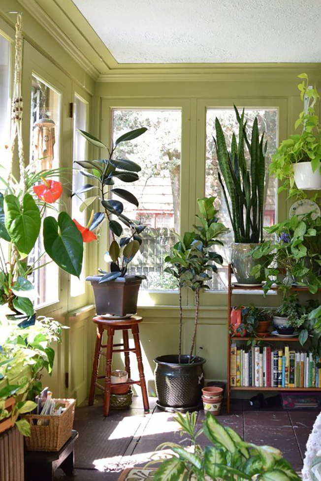 Decorating with house plants i love green inspiration for Living room with indoor plants