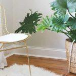 Piante interni, consigli arredamento, migliori piante da interno